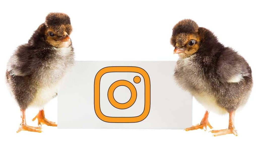 Instagram Management and Advertising